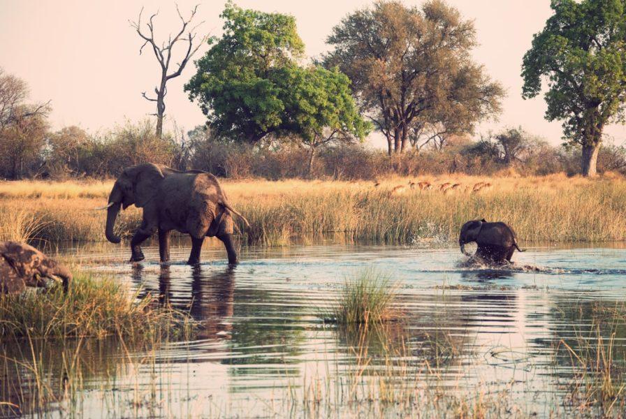 best offbeat destinations in India -  Nagarhole National Park