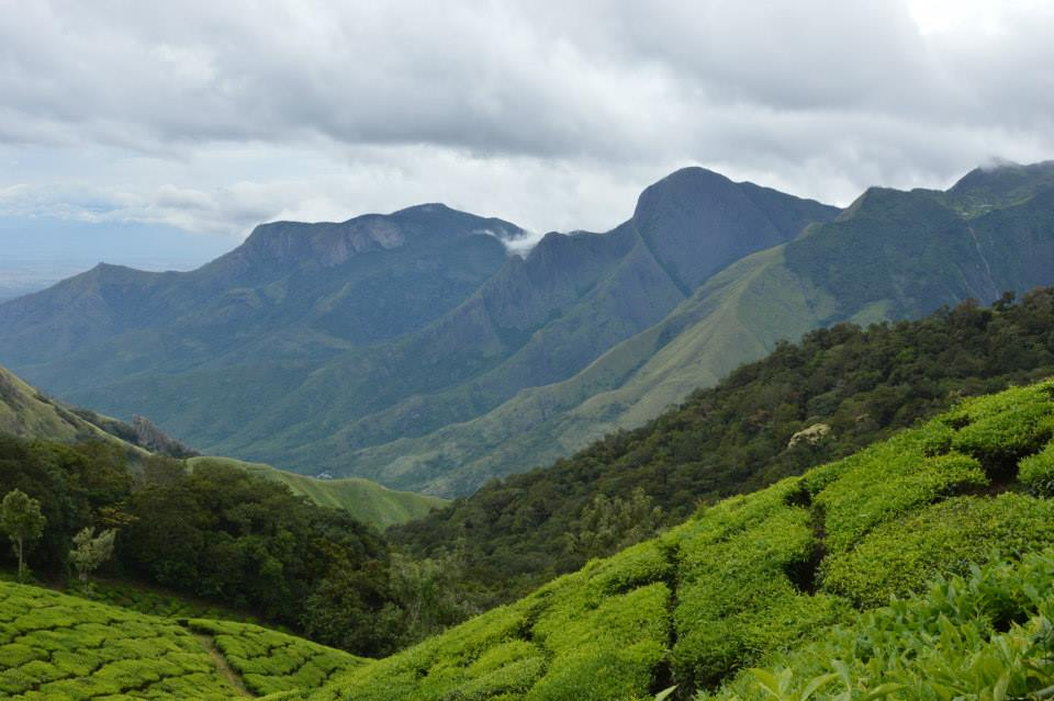 Tea Plantations in Munnar (Photo Credits)
