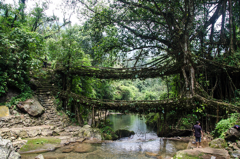 Double Decker Living Root Bridge constructed by weaving the roots of Banyan trees, Places to visit in the Northeast India
