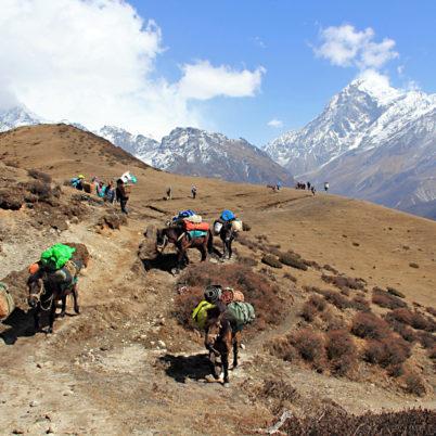 northeast india, seven sisters, goechala, sikkim