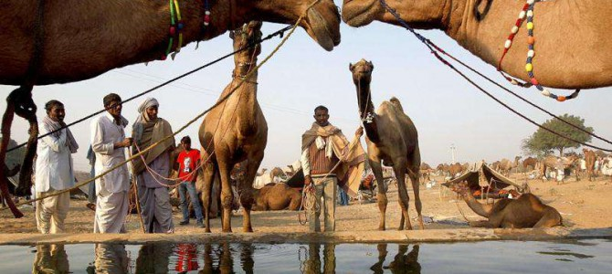 Visiting Pushkar Camel Fair Rajasthan