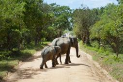 elefanten indien, kinder