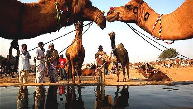 1-Pushkar