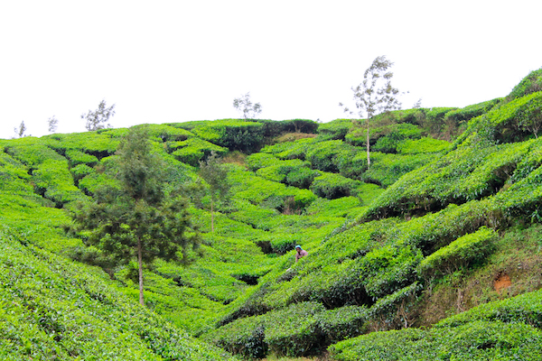 budget backpacking trip in south india, budget backpacking trip in south india