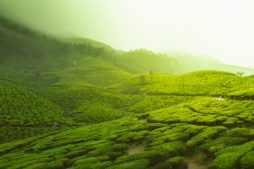 Backpacking in South India