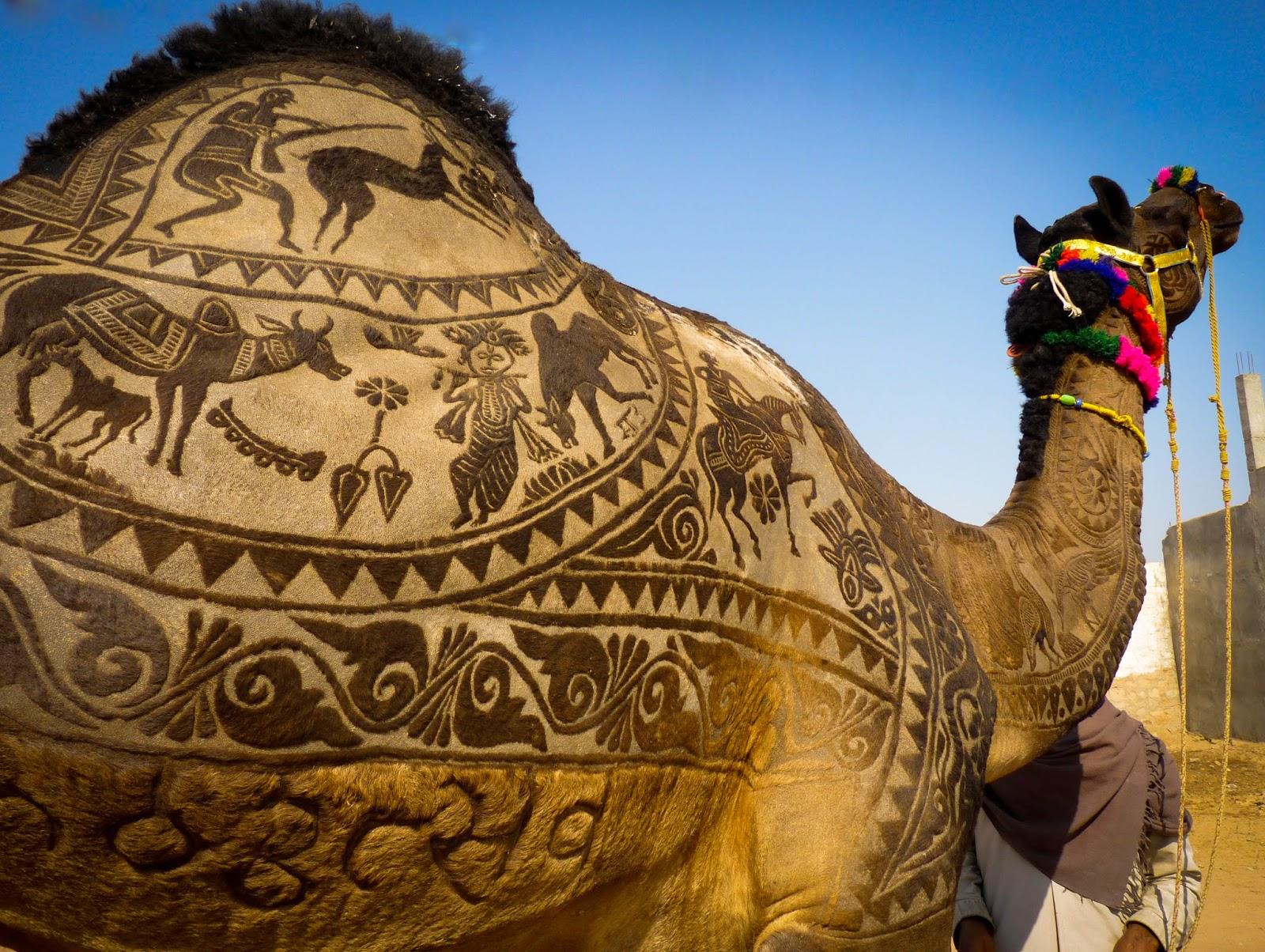 nagaur fair, shaved camel