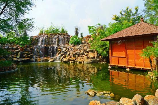 the-tree-house-resort
