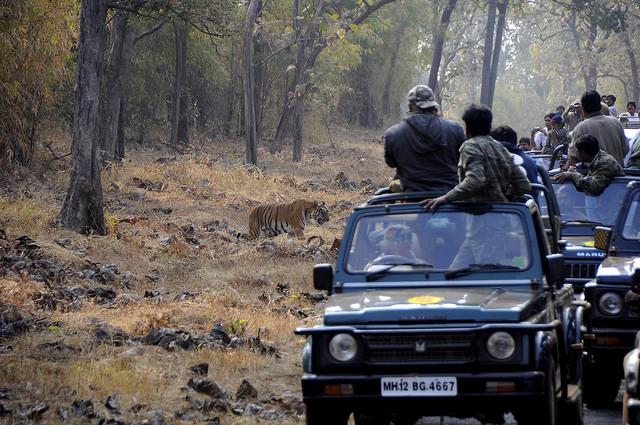 Best wildlife sanctuary in India