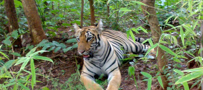 A Safari trip to Tadoba National Park