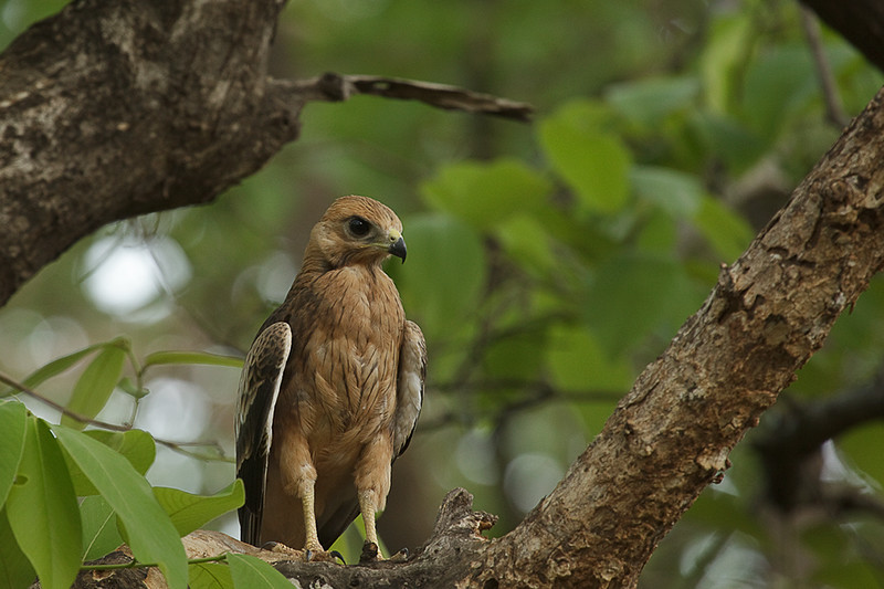 Places to spot rare birds in India