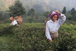 Nordindien Teeplantage, Flughafen Indien