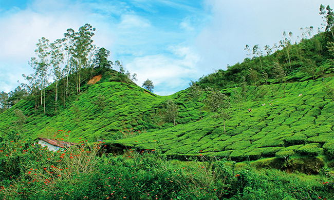 Monsun Indien Grün