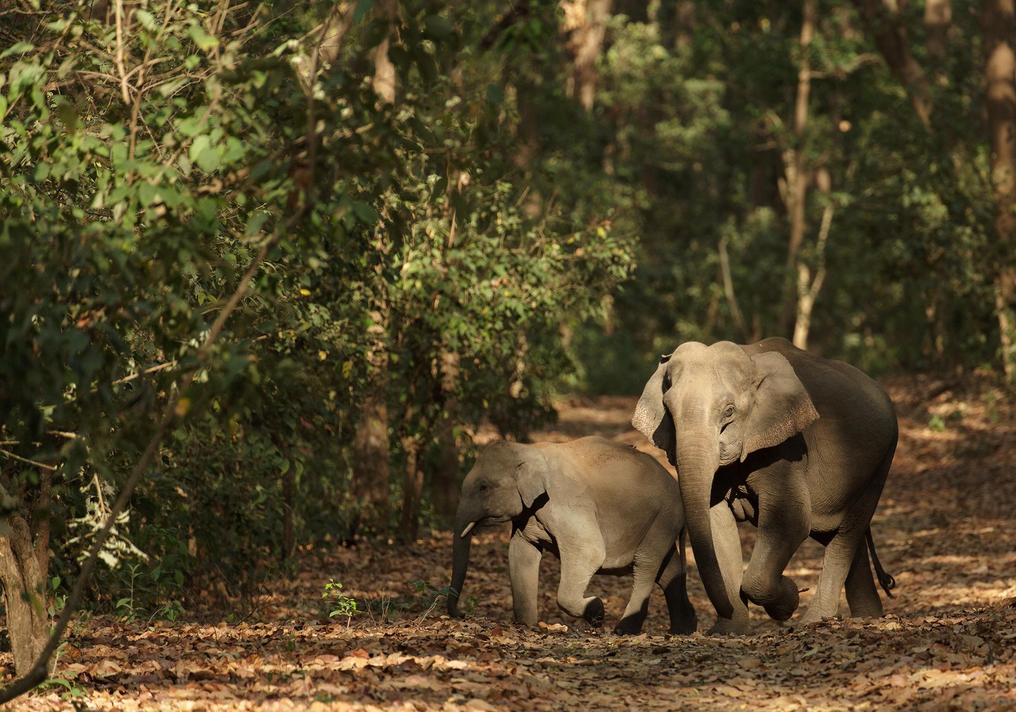 Indien Reiserouten Individualurlaub: Nationalparks in Indien