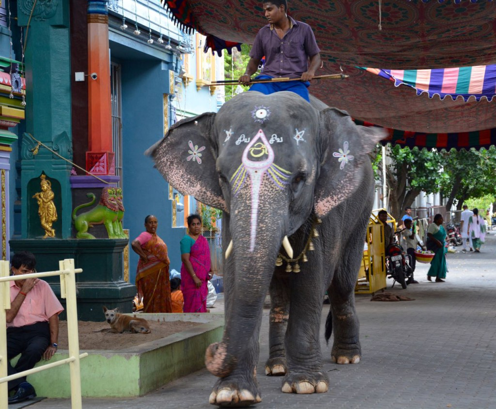 Pondicherry_Tempel_Elefant