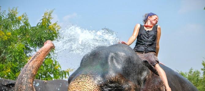 Elefantastic!