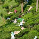 Munnar_Tea_Pickers-670x300