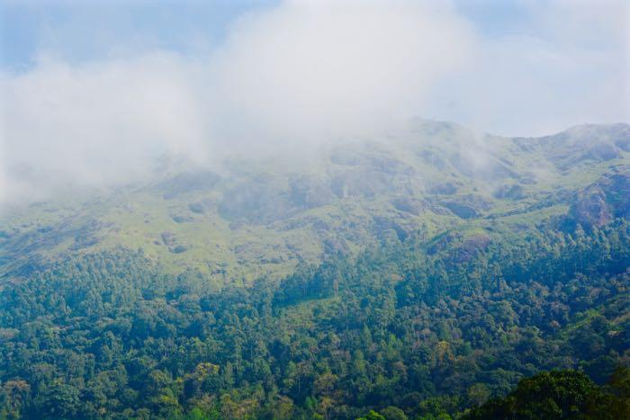 Munnar_View_Hills, teeplantagen