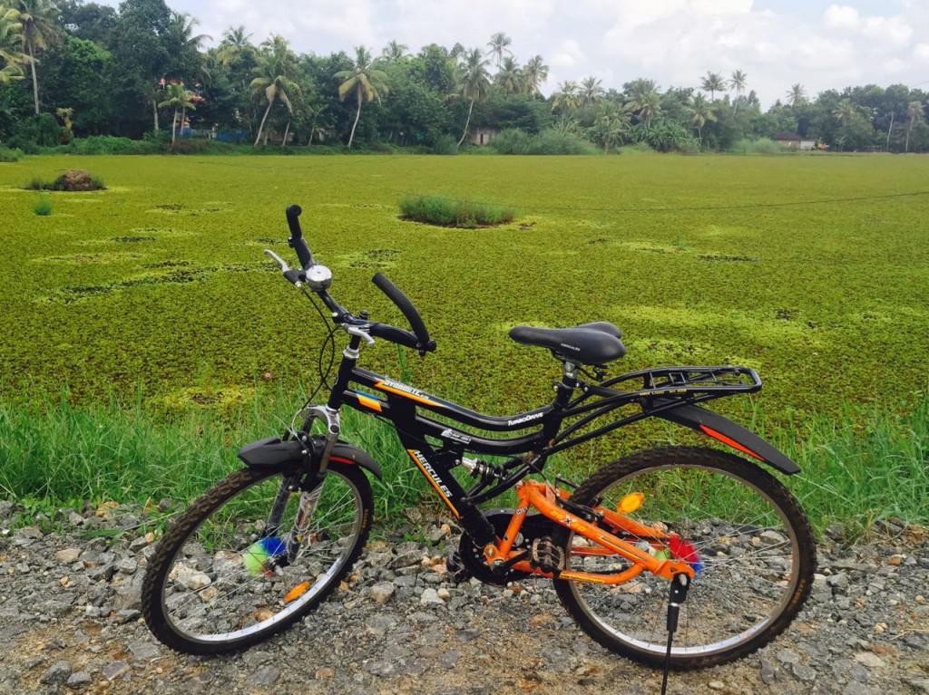 mit Fahrrad durch Kumarakom