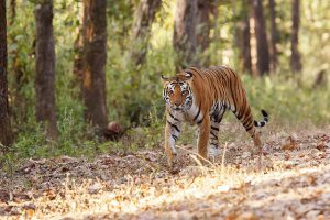 National parks of India, Indian wildlife reserves