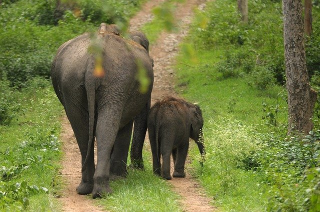 Mother and sibling guarded, India's Wildlife, National Parks in India