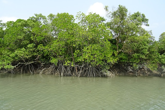 Halophyte of west bengal, National Parks in North India