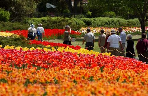 Tulip Festival Srinagar - srinagaronline(dot)in