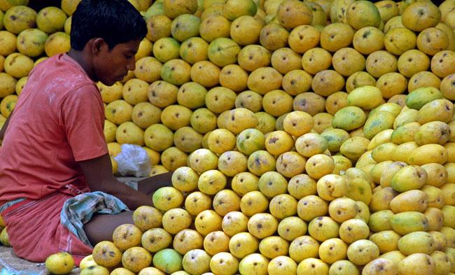 Les mangues en Inde