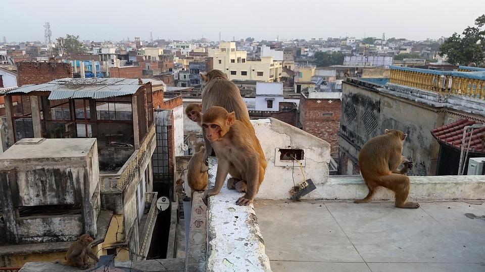 Les toits de Varanasi