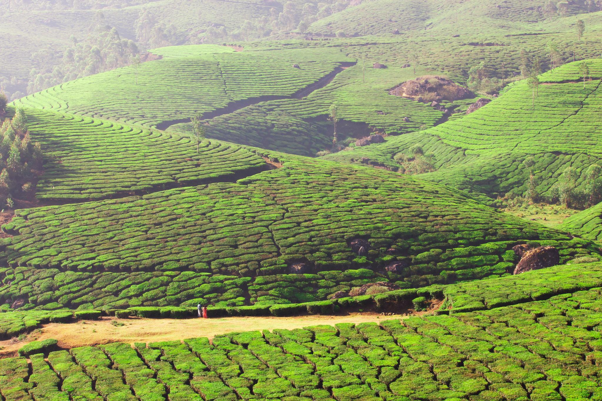 Indienreise: Teeplantagen in Munnar