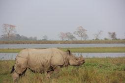 Nationalpark Assam
