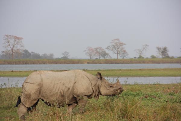 Safaris in India, Family destinations in India