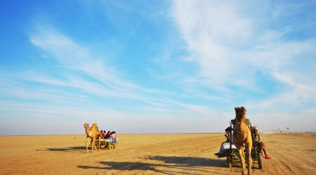 dessert camel safari