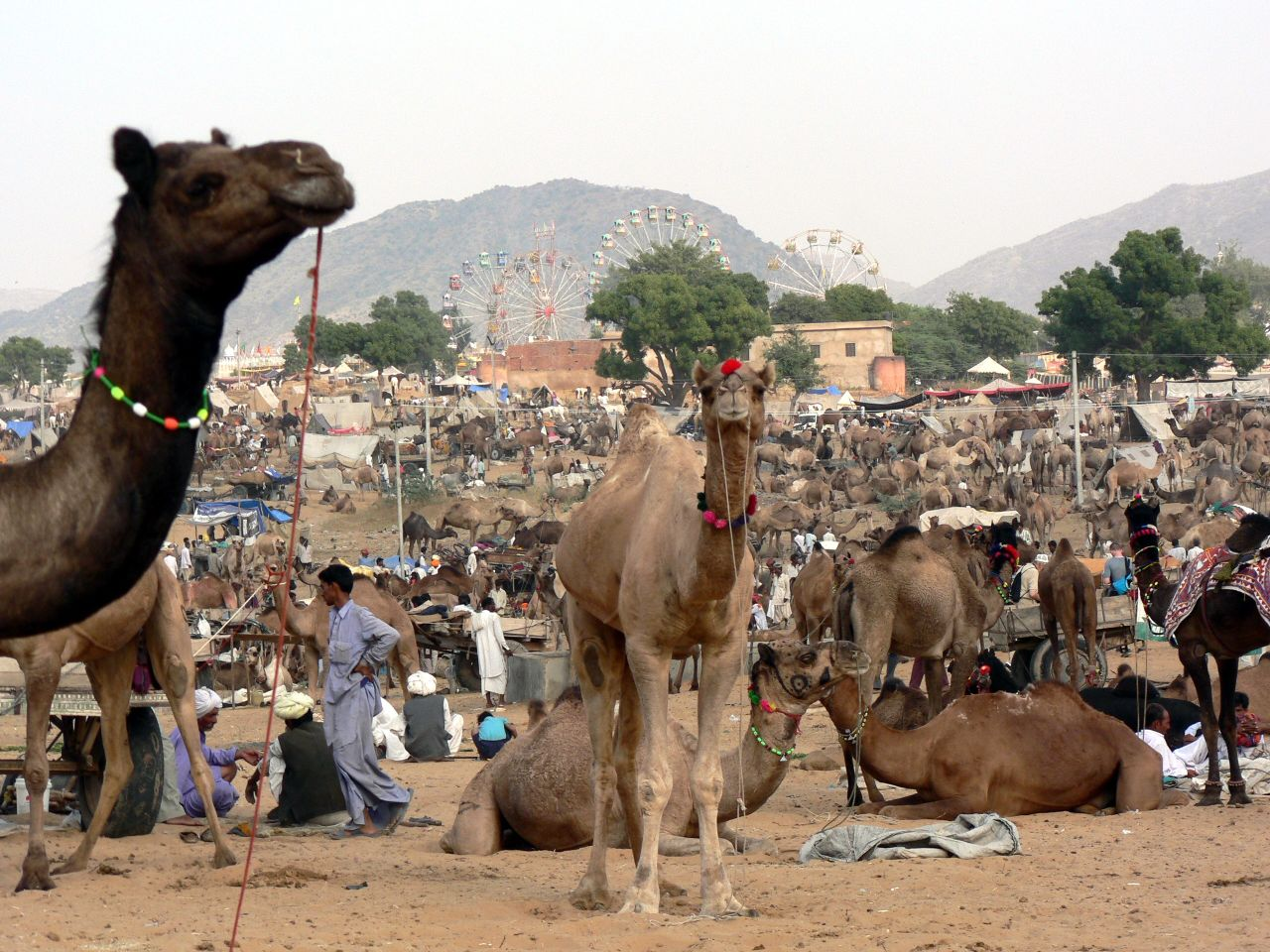 Pushkar Rajasthan Camel Fair October November