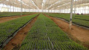 biologische Farm