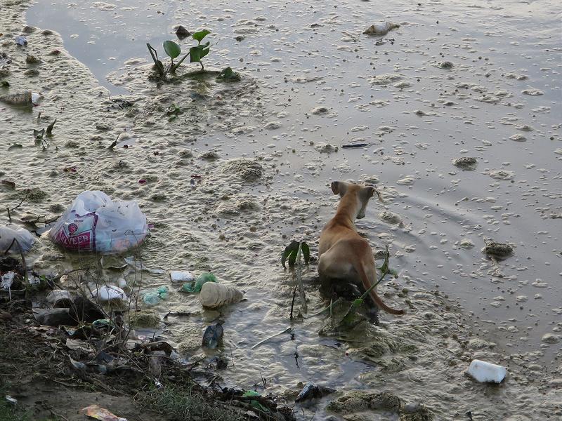Müll findet man in Indien so gut wie überall - auch in den Flüssen