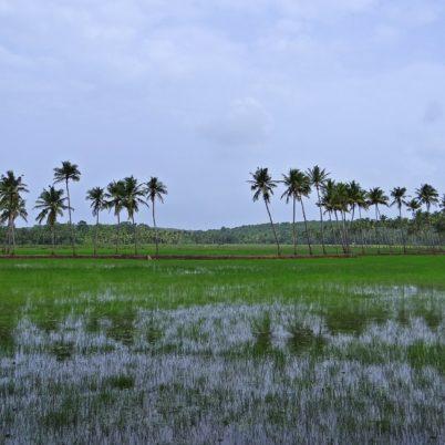 Goa tijdens het laagseizoen