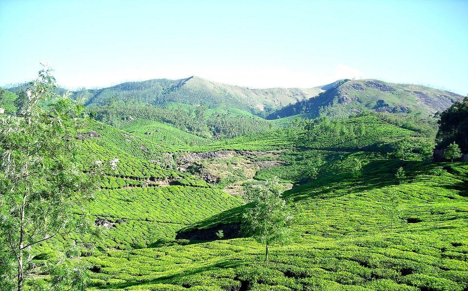Südindien Kerala Munnar tea plantation