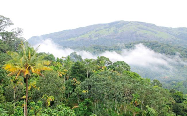 best times to visit kerala, kerala, munnar, best times to visit