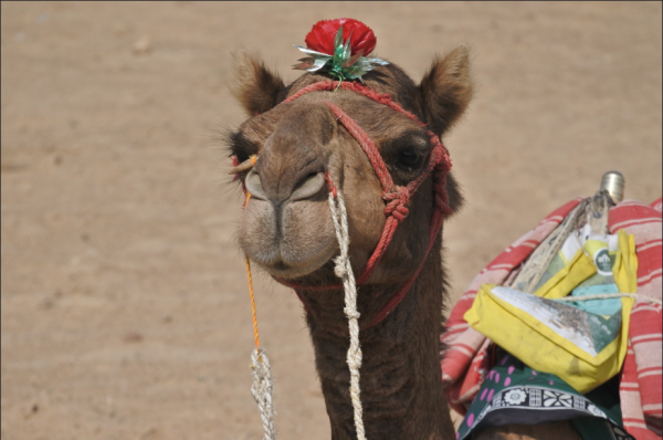 Travel to Jaisalmer, India