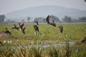 Circuit d' Orissa - La park des oiseaux