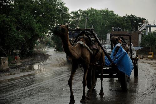clima en india
