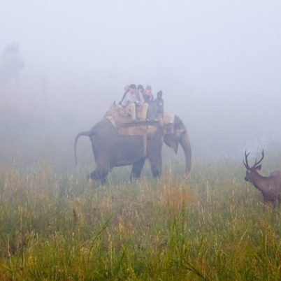 Jim Corbett National Park, India