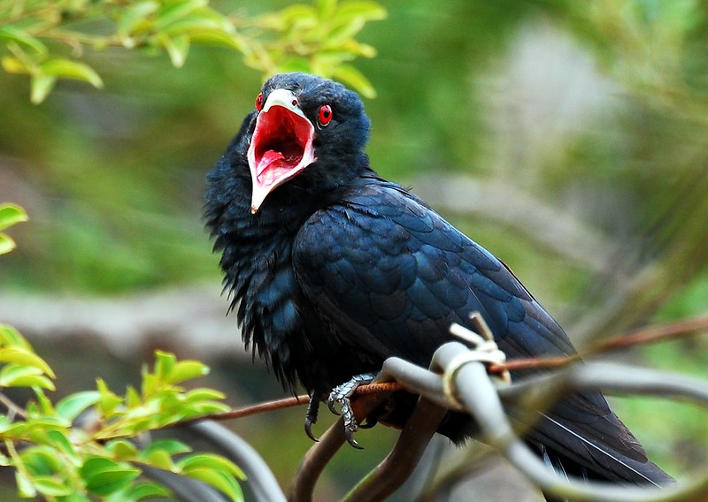 Amgry birds, National Parks in South India