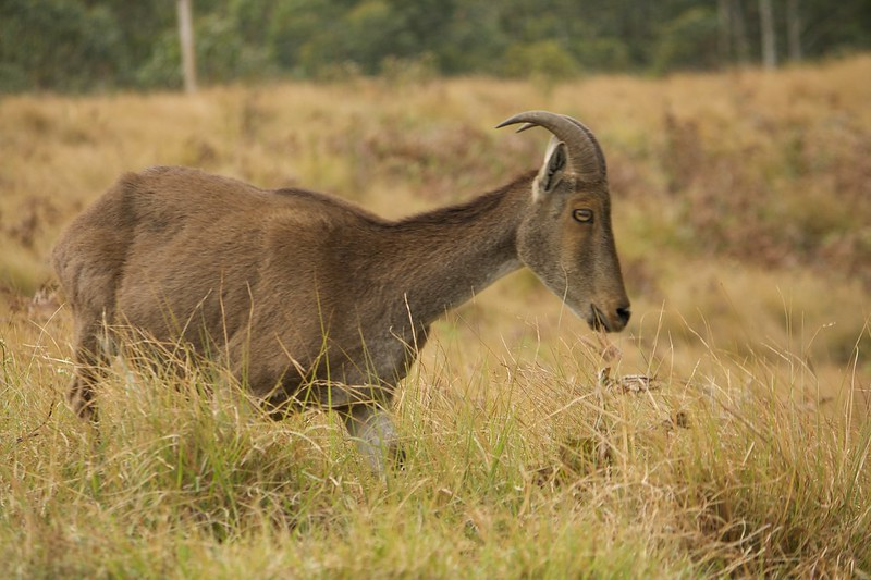 Wildlife photograpy in India