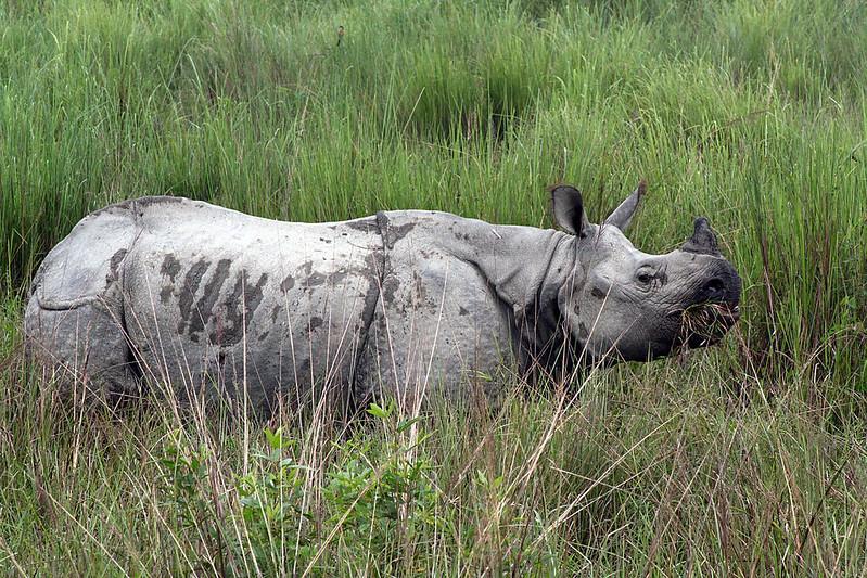 Wildlifr sancturies in India