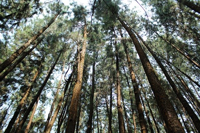 Pine cones and thick forests, Best places to hike in South India