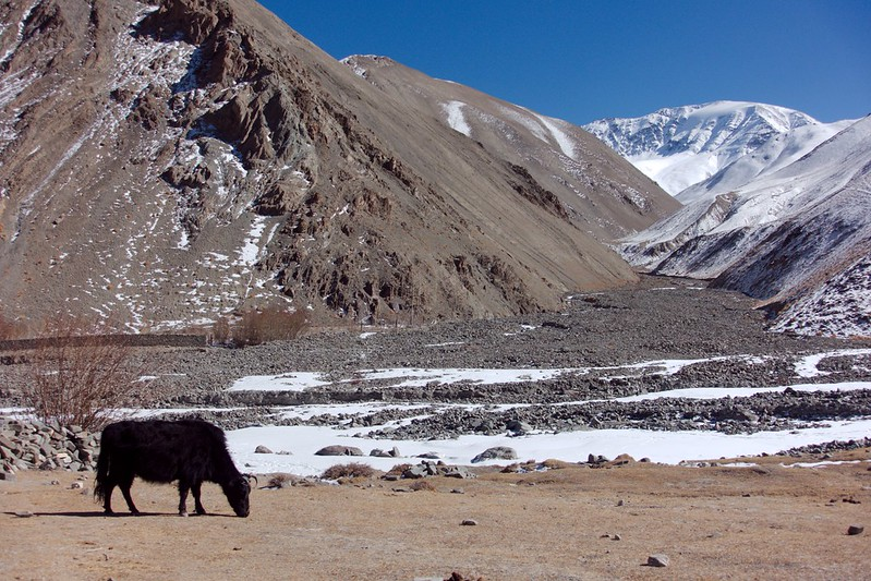 Wildlife in colder regions, North India's Wildlife, National parks to visit in India