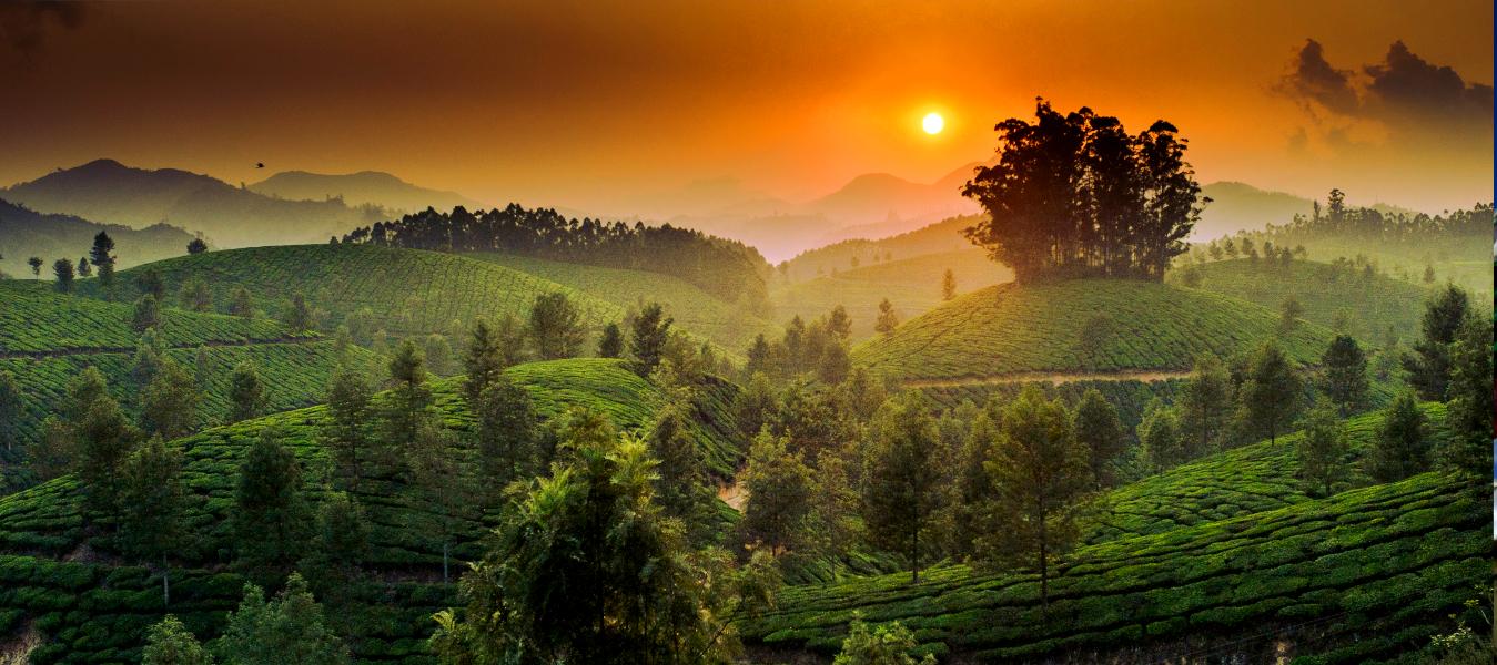 Munaar, Kerala, Kerala Indien