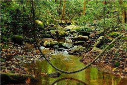 wandern im süden, wandern in kerala, wildlife sanctuary