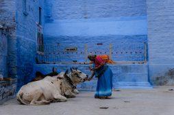 nordindien, rajasthan